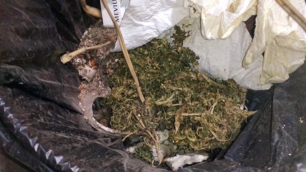 Наказание хранение конопли за какое конопли продавцы украине семян в