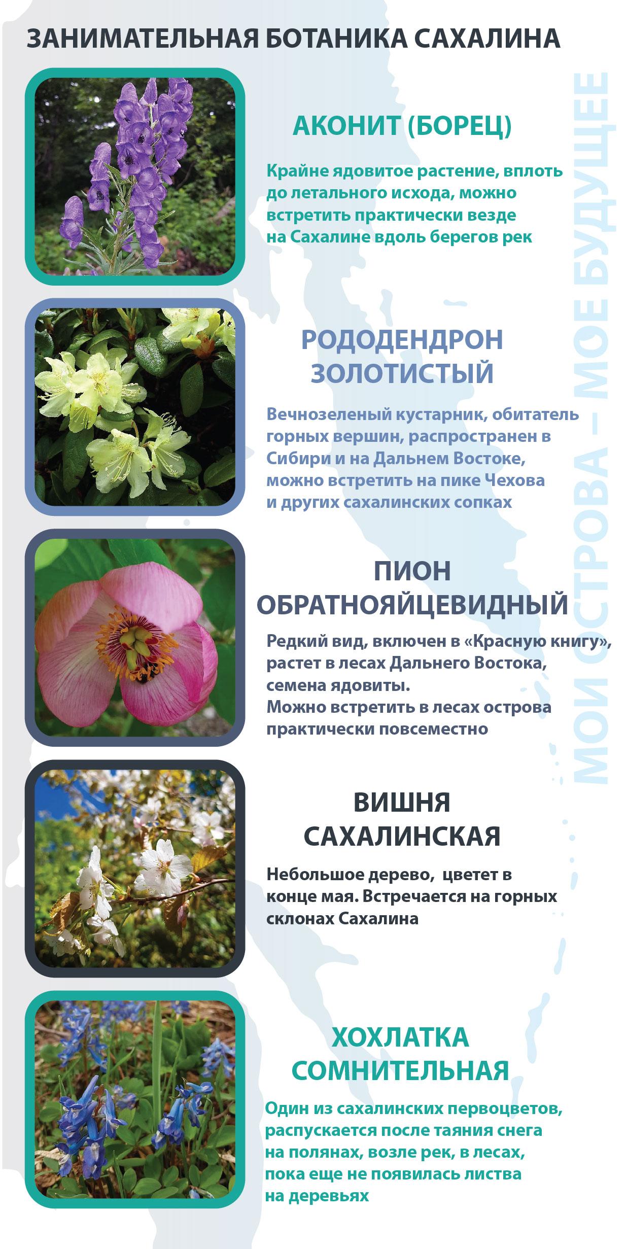 Botanika-01
